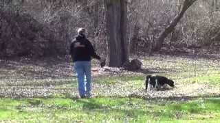 World Class Dog Kennels, Pet Resort,wood Dale Il