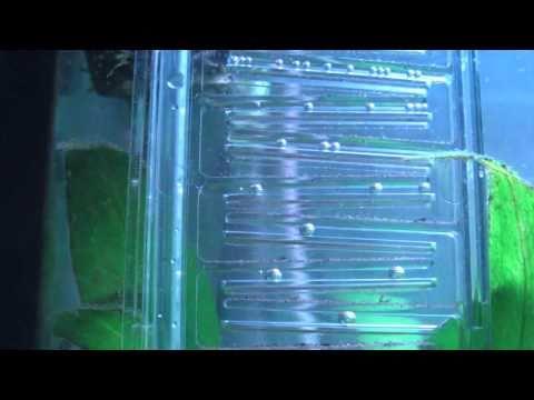 glass co2 reactor doovi. Black Bedroom Furniture Sets. Home Design Ideas