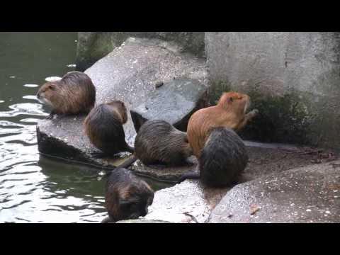 Amsterdam Zoo .mpg