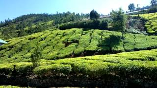 Worlds Tea Plantation And Factory Kolukkumalai India