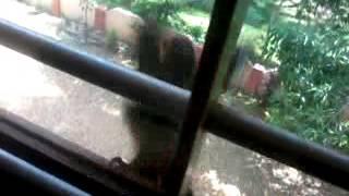 Woodpecker Kidding in Glass window