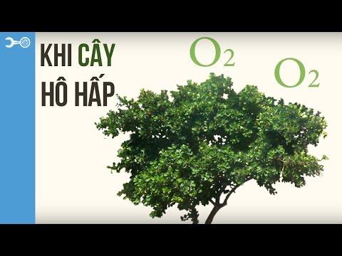 Thế giới thực vật: Khi cây hô hấp