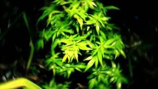Miky Ding La -Weed Toulé jou
