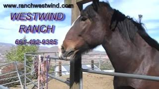 Westwind Ranch Trail Rides talking horse