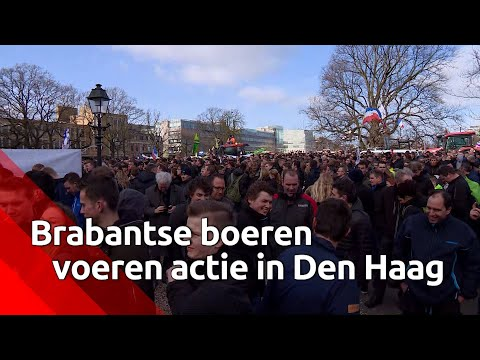 Brabantse boeren demonstreren in Den Haag