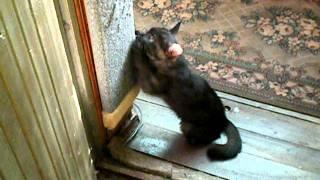 Черный котенок в Челябинске