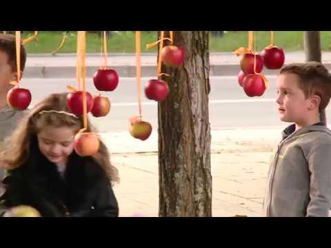 TKB – Wieszali festiwalowe jabłka – 03.10.2017
