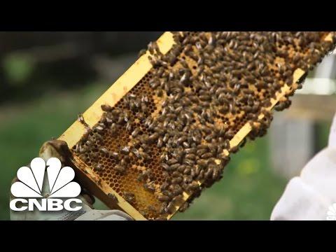 Entrepreneur Profile: Akron Honey   Cleveland Hustles   CNBC Prime