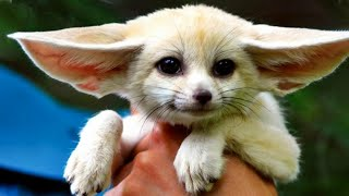 😊 10 Most Awesome And Unusual Pets Ever 🦊🦅