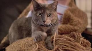 видео почему кошка топчется лапками