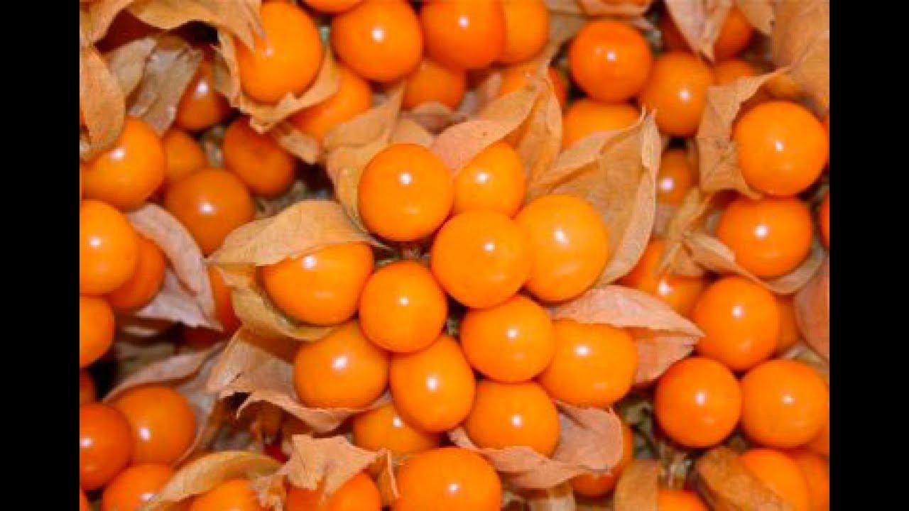 Timbiriches De Fruta Mexico Wwwmiifotoscom