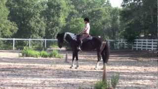 Dressage Instructor Ann Michelsen Thumbnail