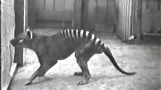 Nesli Tükenmiş Olan 10 Hayvanın Son Videosu