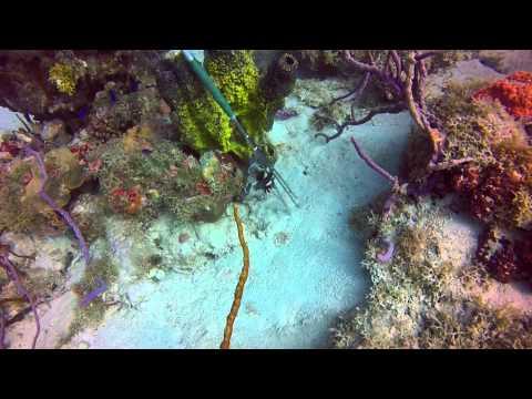 St. Thomas Scuba Diving, GoPro HD