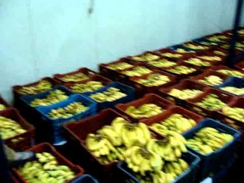 banana ripening cold storage plant in ludhiana punjab india .niteshfruitcompany.com & banana ripening cold storage plant in ludhiana punjab india www ...