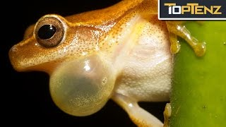 What Would Happen WITHOUT FROGS in the World