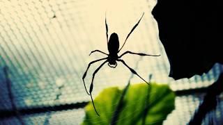 Creepy Spider - Free Horror Footage