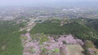 """桜の名所 """" 平原公園 """""""