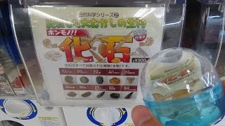 Real Fossil Gacha Capsule Toy