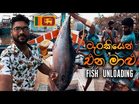 Fish Unloading From Multiday Fishing Boats At Tangalle | Fishing Sri Lanka | FISHING VLOG #2