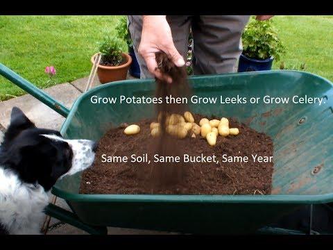 Grow Potatoes then Grow Leeks or Grow Celery.