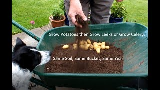 Grow Potatoes then Grow Leeks or Grow Celery.