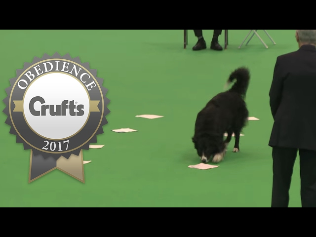 Obedience Championship - Dogs - Scent - Part 3 | Crufts 2017