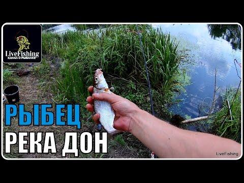 ловля рыбца на поплавочную удочку