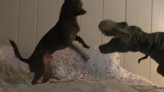 Dino VS Dog