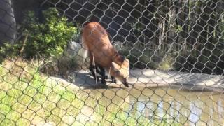 USA '14 | Day Five | San Diego Zoo & Animal Porn