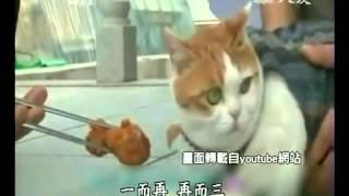 韓國龍興寺-吃素禮佛ㄉ貓-慈濟-證嚴法師