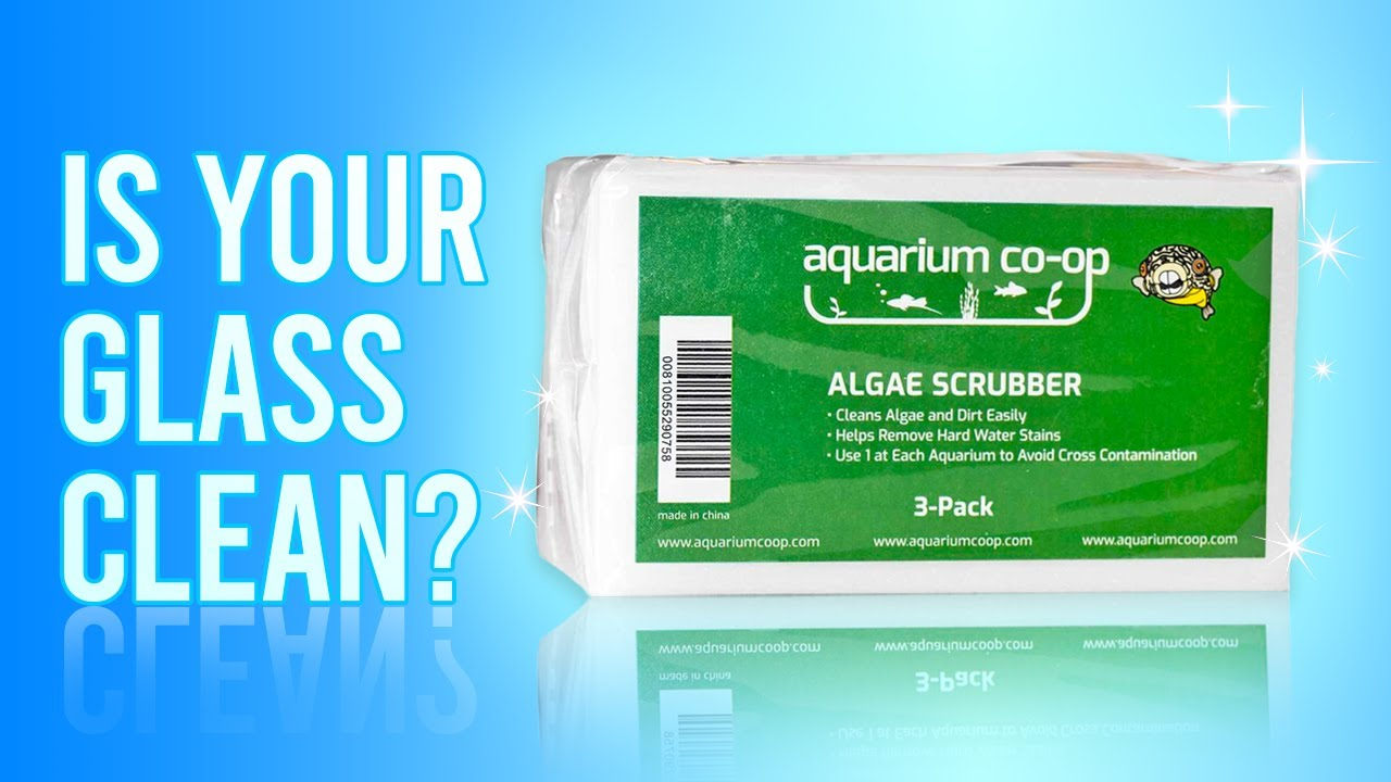 Removing Algae on Your Glass or Acrylic Aquarium #Shorts