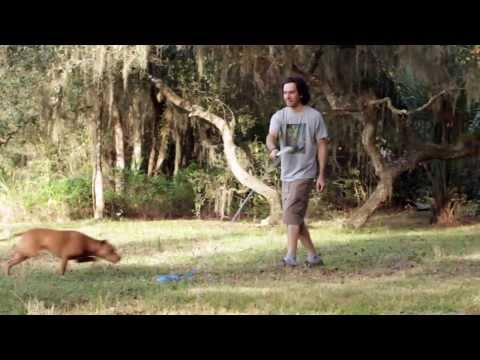Flirt Pole V2 Dog Exercise Toy from Squishy Face Studio