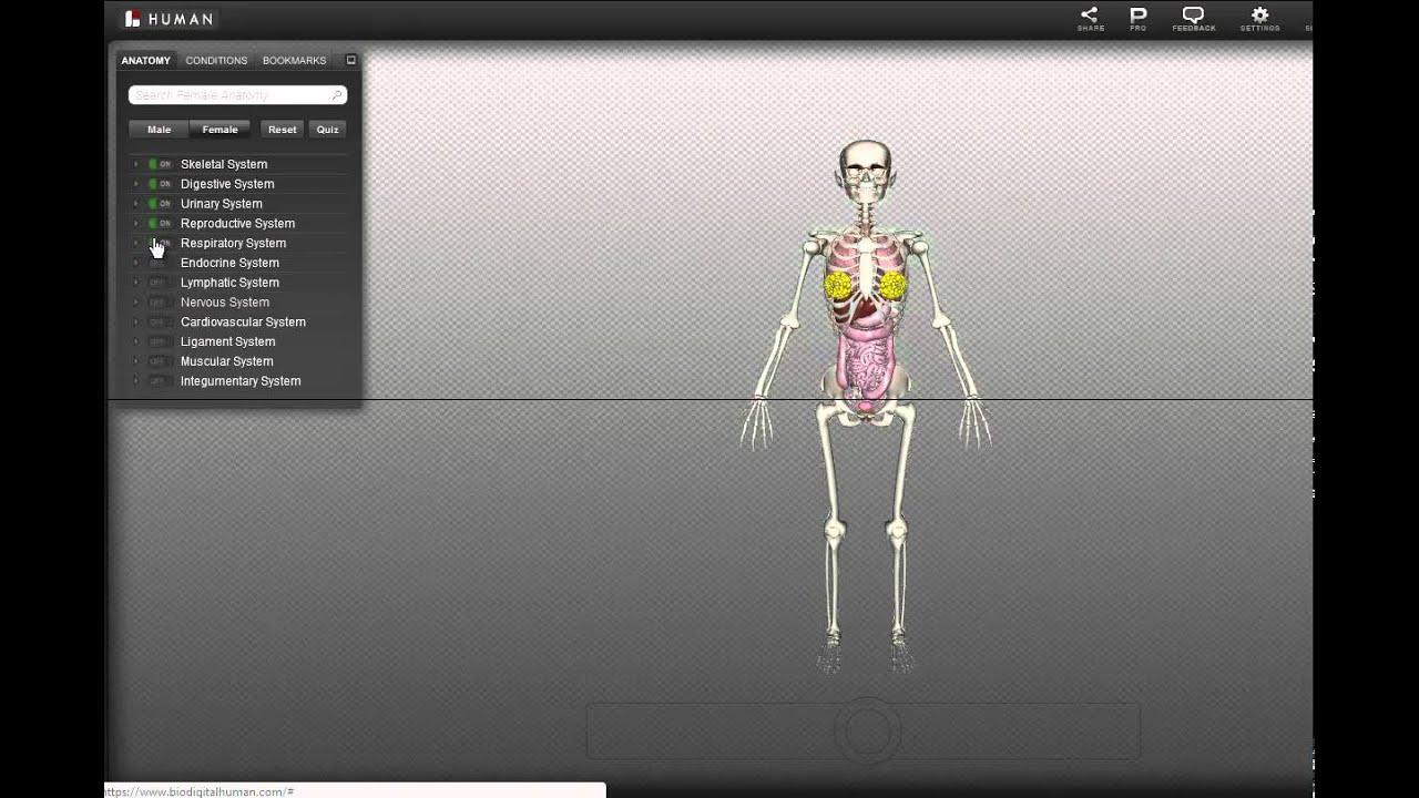 BioDigitalHuman - Menschlicher Körper in 3D - YouTube