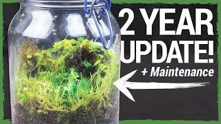 closed-tropical-terrarium-2-year-update