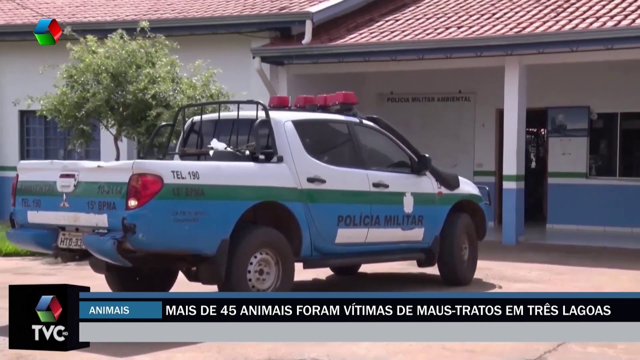 Mais de 45 animais foram vítimas de maus-tratos em Três Lagoas