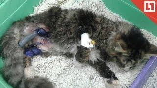 Котёнок еле выжил после издевательств