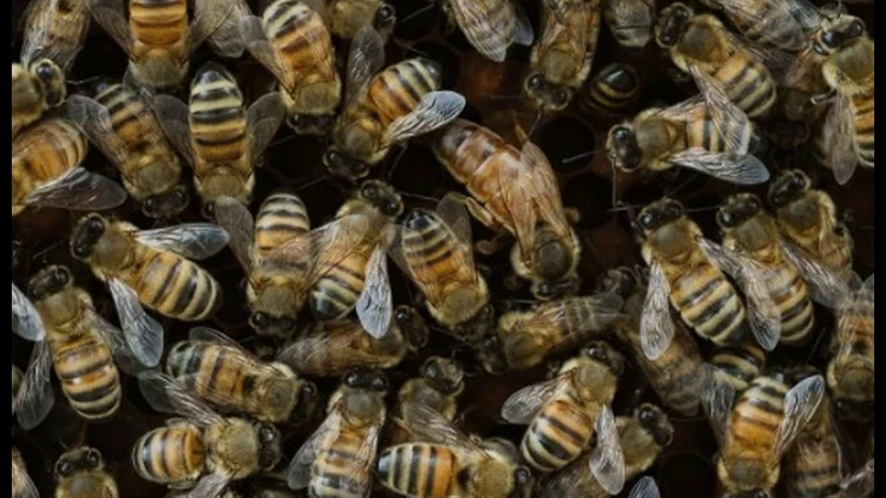 Russian Officials Raise Alarm After Mass Bee Deaths