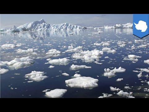 Antarctica melting: NASA confirms West Antarctic ice sheets are melting  - TomoNews