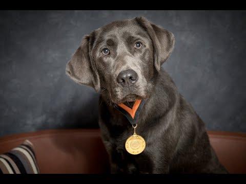 Dexter - Labrador - 4 Weeks Residential Dog Training