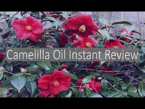 Japanese Camellia seed Oil review (Day 1) (Tsubaki oil)