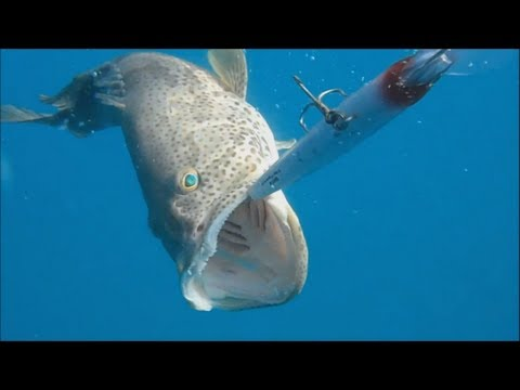 Fishing Adventures #55 - Another Day Of Hammour (Grouper) Trolling In Abu Dhabi