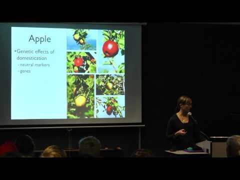 Patterns of evolution in domesticated apple - Briana Gross