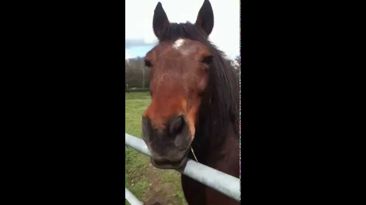 Watch What Happens When A Horse Farts During An Interview ...  |Funny Horse Farts