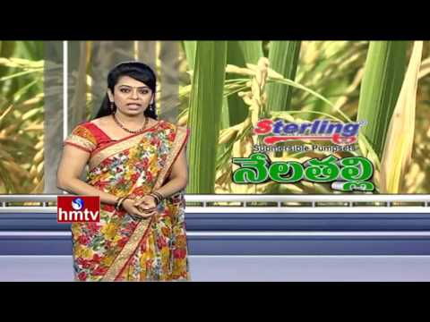 Success Story Of RNR 15048 New Rice Variety Farming | Telangana Sona Rice | Nela Talli | HMTV