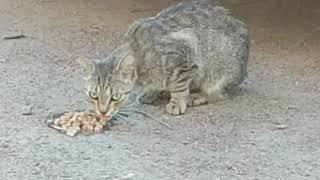 Бездомные кошки Санкт-Петербург