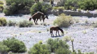 Wheeler Pass Mustangs XXX Rated May 2014