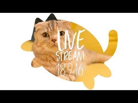 [ LIVE ] 짱구.캠핑.선물 수리노을 고양이가족 2018년9월 16일 【SURI&NOEL】