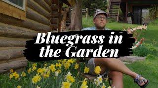 Bluegrass in the Garden