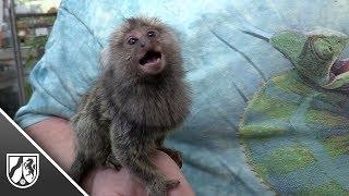 Gestohlener Affe aus Duisburger Zoohandlung wieder da